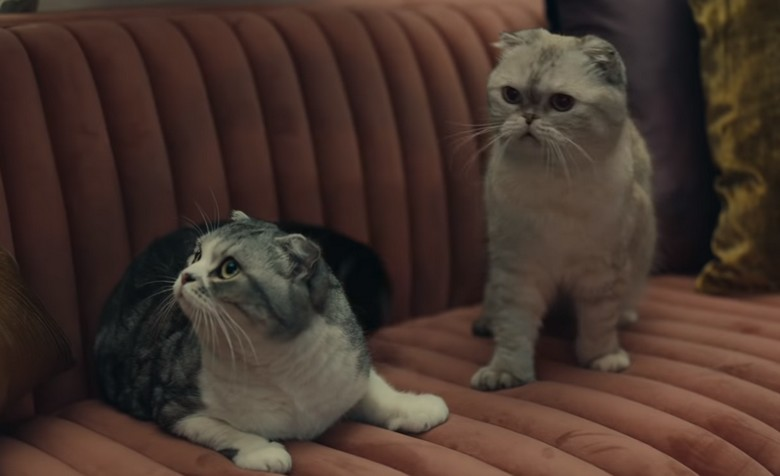 Olivia and Meredith, Taylor Swift's cats